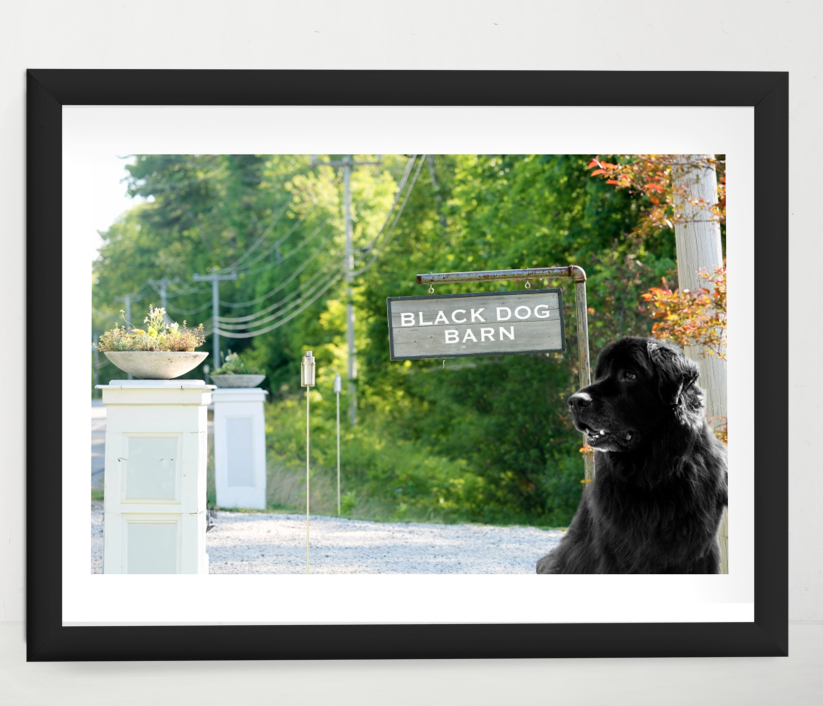 Photograph of my Dog Bailey- Black dog Barn started from here